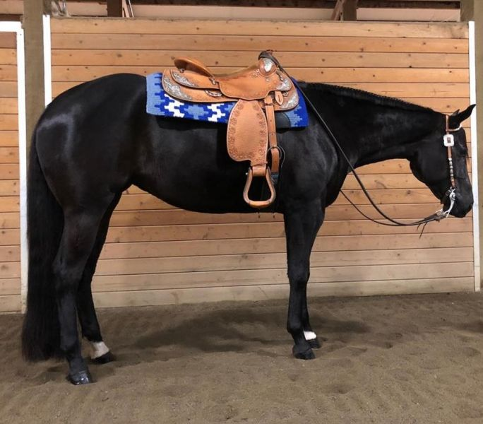 2013 Aqha All Around Horse For Sale2